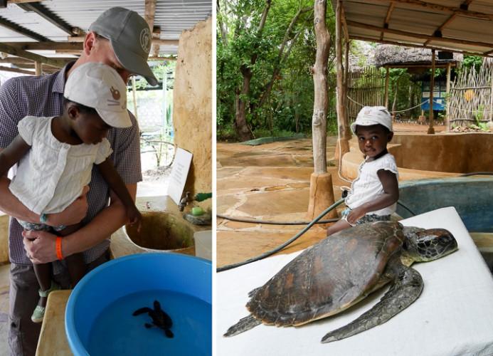 P1000371 schildpadden